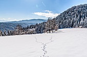 Traces in snowy winter landscape with coniferous forest, Himmelberg, Carinthia, Austria