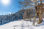 Snowy winter landscape with hunters' stand, Himmelberg, Carinthia, Austria