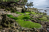 Green-covered stones on Efate Beach, Vanuatu, South Pacific, Oceania