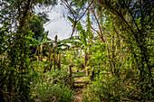 Entrance to a garden, Efate, Vanuatu, South Pacific, Oceania
