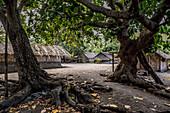 Traditional village with straw huts on Malekula, Vanuatu, South Pacific, Oceania
