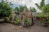Small garden on Malekula, Vanuatu, South Pacific, Oceania
