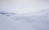 Ski tour through a wide snow field with hills and low clouds on the Tajakopf in Ehrwald