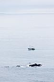 Ein Fischerboot läuft in den Hafen von Erquy ein. Jakobsmuschel Fang. Bretagne, Frankreich