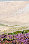The bay of Sable d Or at Erquy at low tide is abstract. Located between Cap Frehel and Cap Erquy. Brittany, France.
