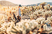 Woman walks at sunset in Cholla Cactus Garden, Joshua Tree National Park, California, USA, North America