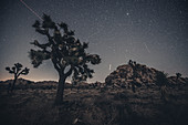 Joshua Tree under a starry sky in Joshua Tree National Park, Los Angeles, California, USA, North America