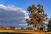Tree in autumn in Linum, Brandenburg