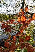 Machnower See, Herbst, Uferweg, Sonnenuntergang, Berlin Brandenburg, Deutschland