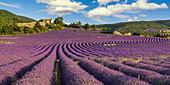 Lavender field, Montagne de Lure, Vaucluse, Chapel, Provence, France
