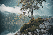 Conifer and birch on a rock in the Hintersee as an image section with selective focus. Hintersee, Berchteslgadener Land, Bavaria, Germany
