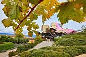 Weinberge im Herbst, die Stadt des Weins, Weingut Marques de Riscal, Gebäude von Frank O. Gehry, Elciego, Alava, Rioja Alavesa, Baskenland, Spanien, Europa
