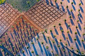 Aerial view of olive groves and cereal fields, Toledo, Kastilien-La Mancha, Spain, Europe