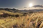 Landscape in La Font del Llop, municipality of Monforte del Cid, Alicante Spain.