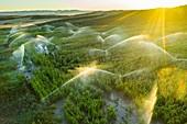 Farmland with watering. Aerial view. Navarre, Spain, Europe.