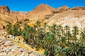 Mountain oasis. Chebika. Tunisia, Africa.