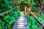 Wooden bridge in the tropical nature of Topes de Collantes, Trinidad, Republic of Cuba, Caribbean, Central America.