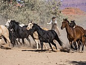 Lariat in hand, a cowgirl wrangler drives a herd of horses out of the corral at the Red Cliffs Ranch near Moab, Utah.