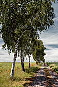 Poppies, birches and path on the edge of the field, Sachsenhausen, Waldeck, Waldeck-Frankenberg, Hesse, Germany, Europe