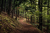Path in the forest at Daudenberg, Kellerwald-Edersee National Park, Hesse, Germany, Europe