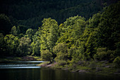 Beeches in the evening light, confluence Werbe and Edersee, Waldeck, Waldeck-Frankenberg, Hesse, Germany, Europe