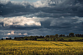 Barley field near Sachsenhausen in the evening light, Waldeck, Waldeck-Frankenberg, Hesse, Germany, Europe