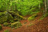 Frühling in der Ysperklamm im Waldviertel, Niederösterreich, Österreich