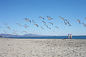 Seagulls and strollers on Santa Barbara Beach, California, USA.