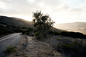 Road in the evening light on the way to Jalama Beach, California, USA.