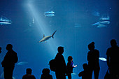 Silhouettes of visitors in front of a large aquarium at the Monterey Bay Aquarium in Monterey, California, USA.