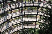 Blick auf die Besucher auf dem Aussichtsturm am Baumwipfelpfad in Neuschönau, Nationalpark Bayerischer Wald, Neuschönau, Bayern, Deutschland, Europa