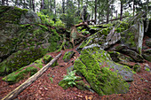 View of mossy rocks on the hiking trail to Lusen in the Bavarian Forest National Park, Lower Bavaria, Bavaria, Germany, Europe