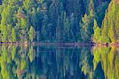 Intensive Laubfärbung von Bäumen an einem See, Junsele, Norrbottens Län, Schweden