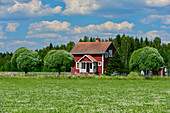 Red Swedish house with pil trees and flower meadow, near Siljansnäs, Dalarna, Sweden
