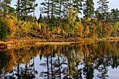 Herbstfärbung der Bäume spiegelt sich in einem See, Smålandsstenar, Jönköpings Län, Schweden