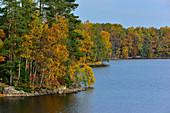 Herbstfärbung im Wald, See Kösen, bei Angelstad, Kronobergs Län, Schweden