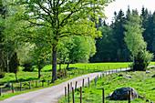 Abgelegene Strasse durch Wald und Felder, bei Långaryd, Halland, Schweden