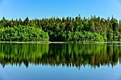 Der Wald spiegelt sich in einem See, Bolmsjö, Halland, Schweden