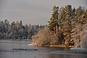 Snow on the treetops by a frozen lake, Långaryd, Halland, Sweden