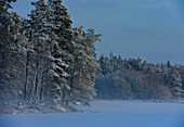 Schöne Winterstimmung mit verschneitem Wald und See, bei Långaryd, Halland, Schweden