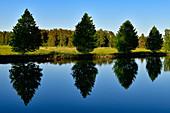 Eine Reihe von kleinen Bäumen spiegelt sich im Wasser des Götakanals, Hajstorp, Västergötland, Schweden