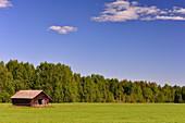 An old wooden hut in a pasture with birch forest, near Piteå, Norrbottens Län, Sweden