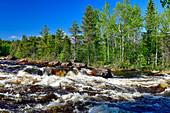 Wald und Stromschnellen im Torneälv, bei Pajala, Norrbottens Län, Schweden
