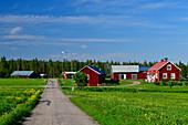Siedlung und kleine Strasse im Ort Lovikka am Wald, Norrbottens Län, Schweden