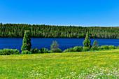 Eine Blumenwiese vor einem See und Wald, bei Vitvattnet, Norrbottens Län, Schweden
