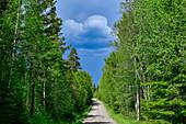 Eine kleine Schotterstrasse im Wald bei Abborrberg, Provinz Örebro, Schweden