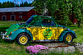 An old VW Beetle is used as a decoration for a large birch tree, at Sirapsbacken, Västerbottens Län, Sweden