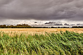 Thunderstorm mood over the field, Dorum, Lower Saxony, Germany