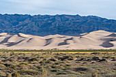 View of the Hongoryn Els sand dunes in the Gobi Desert in southern Mongolia.