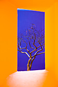 A vibrant yellow window framing a tree with bare branches against blue sky